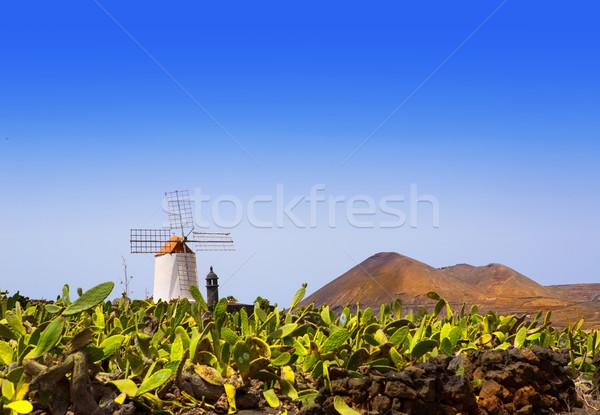 Lanzarote Guatiza cactus garden windmill Stock photo © lunamarina