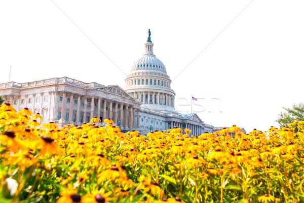 Gebouw Washington DC daisy bloemen USA Geel Stockfoto © lunamarina