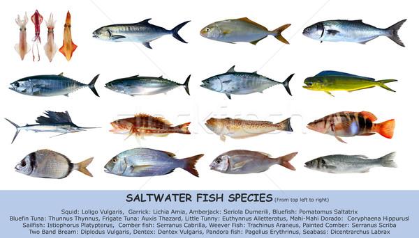Vis witte zeevruchten water natuur zee - Fotos de peces del mediterraneo ...