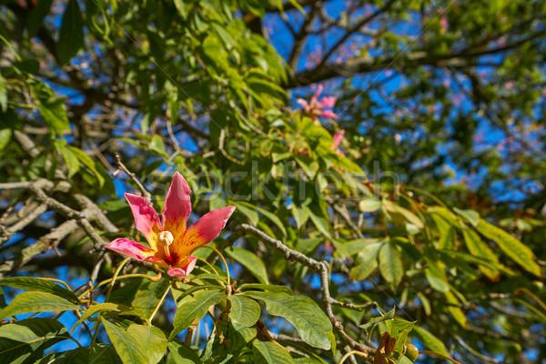 Valencia fa virágok park kertek kilátás Stock fotó © lunamarina