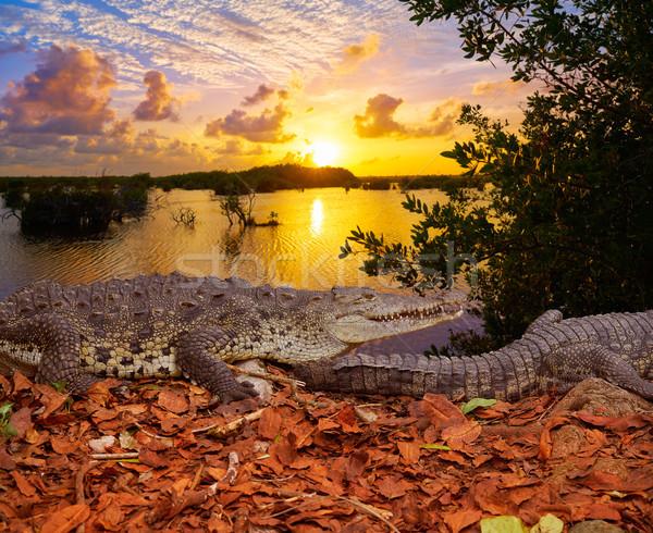Crocodile Mexico Riviera Maya photomount Stock photo © lunamarina