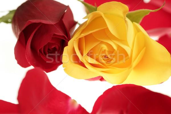 Сток-фото: два · закрывается · макроса · красный · желтый · лепестков