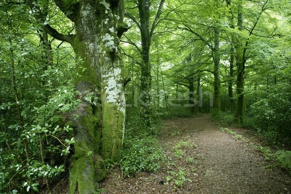 Foto stock: Verde · magia · forestales · bosques · sol · reflexiones