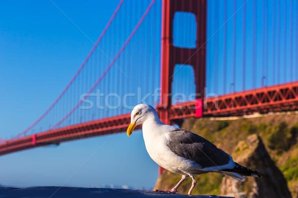 Сан-Франциско Золотые Ворота чайка Калифорния США синий Сток-фото © lunamarina