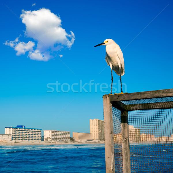 Praia Flórida pier costa mar pássaro Foto stock © lunamarina