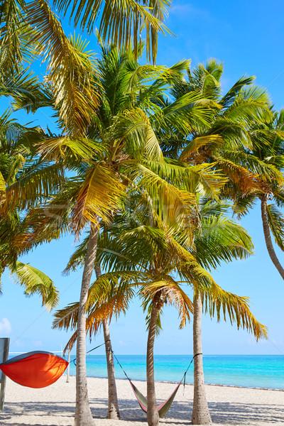 Clave oeste Florida playa palmeras EUA Foto stock © lunamarina