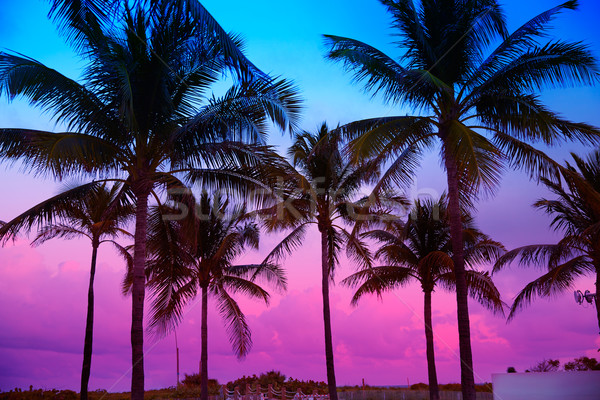 Stock fotó: Miami · tengerpart · dél · naplemente · pálmafák · Florida
