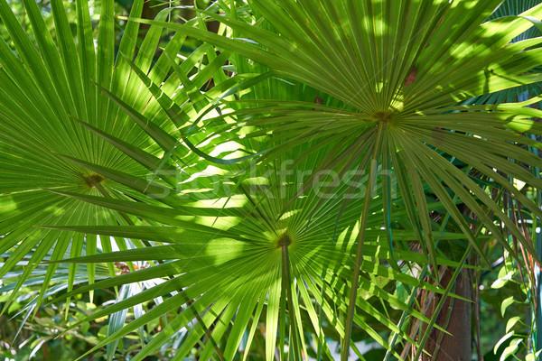 Jungle rainforest in Riviera Maya Stock photo © lunamarina