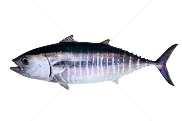 Photo stock: Thon · isolé · blanche · réel · poissons · eau