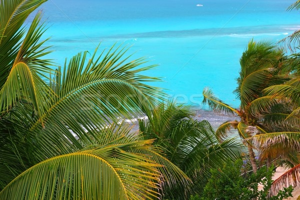 Caribbean turquoise sea coconut palm trees Stock photo © lunamarina