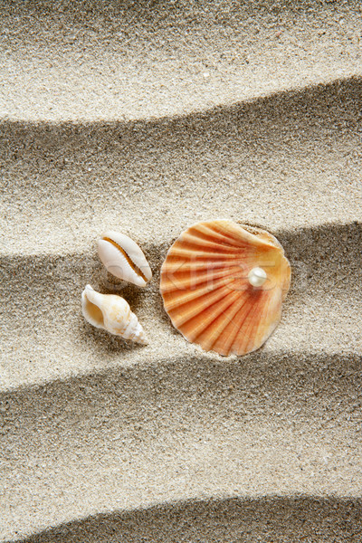 beach sand pearl clam shell summer vacation Stock photo © lunamarina