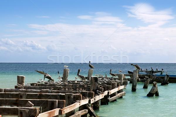 Caribbean old aged wooden dock with seagull and pelikan sea birds Stock photo © lunamarina