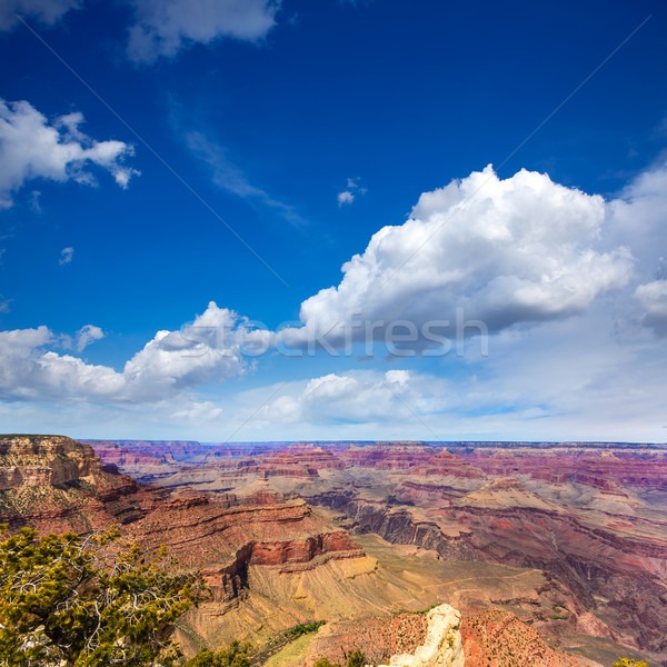 Arizona Grand Canyon National Park Yavapai Point Stock photo © lunamarina