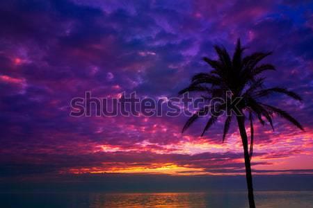 Gün batımı gündoğumu hurma ağacı akdeniz deniz doğa Stok fotoğraf © lunamarina
