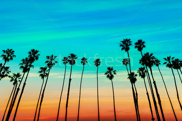 Californië zonsondergang palmboom hemel Stockfoto © lunamarina
