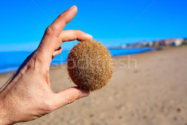Mediterranean Posidonia beach in alicante Denia  Stock photo © lunamarina