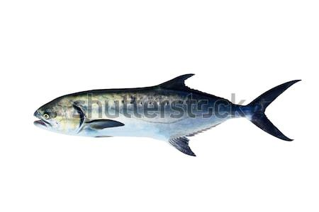 Ryb odizolowany biały oka charakter ocean Zdjęcia stock © lunamarina