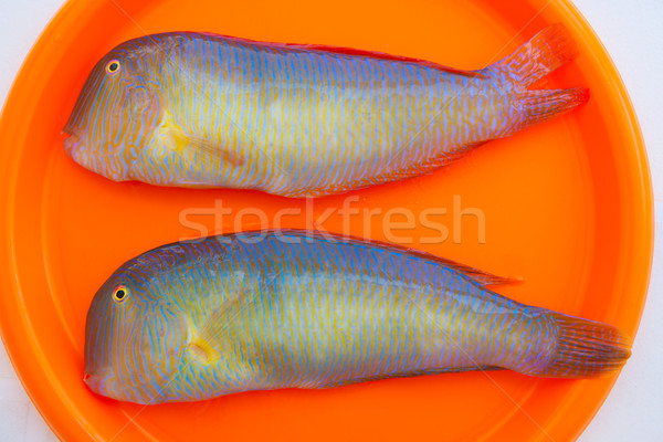 Fish Xyrichthys novacula also called Raor pearly razorfish Stock photo © lunamarina