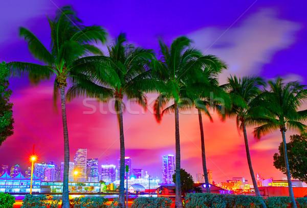 Miami linha do horizonte pôr do sol palmeiras Flórida EUA Foto stock © lunamarina