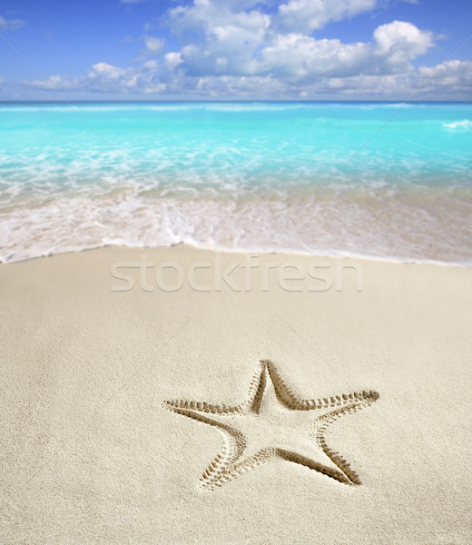 caribbean beach starfish print  white sand summer Stock photo © lunamarina