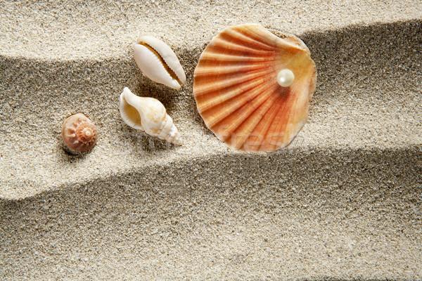 beach sand pearl clam shell summer vacation Stock photo © lunamarina