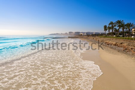 Newport beach in California with palm trees Stock photo © lunamarina