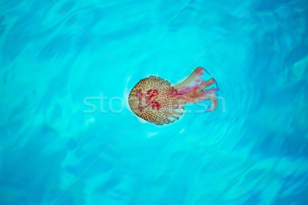 Mályvaszínű meduza türkiz mediterrán víz természet Stock fotó © lunamarina