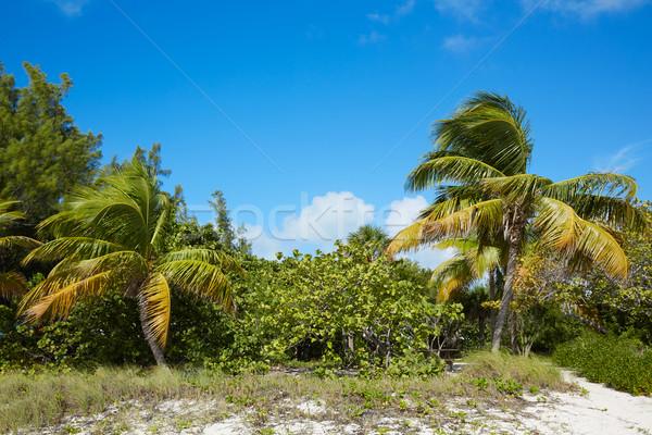 Foto stock: Clave · oeste · playa · fuerte · parque · Florida