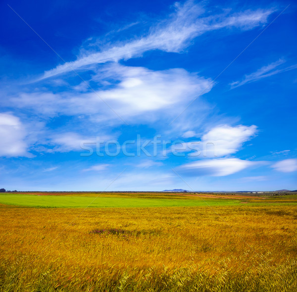 Cereal fields in Extremadura of Spain  Stock photo © lunamarina