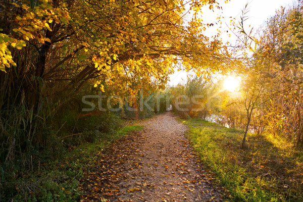 Sunset on autumn Parque del Turia of Valencia Stock photo © lunamarina