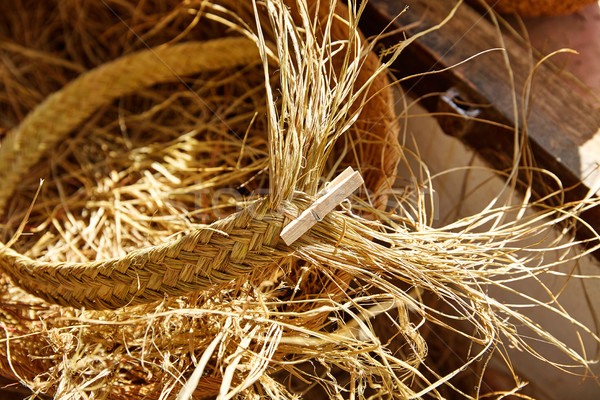 Esparto halfah grass used for crafts basketry Stock photo © lunamarina