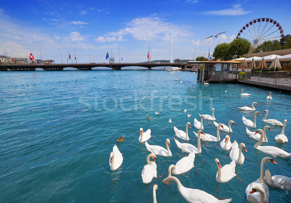 Geneva swans Geneve at Leman lake in Swiss Stock photo © lunamarina