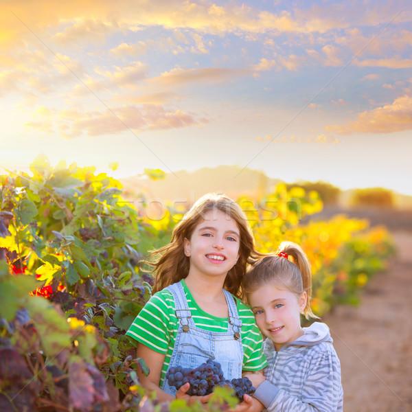 sister kid girs farmer in vineyard harvest in mediterranean autu Stock photo © lunamarina