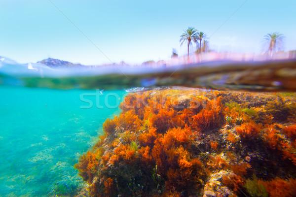 Mediterrán vízalatti hínár Spanyolország fű természet Stock fotó © lunamarina
