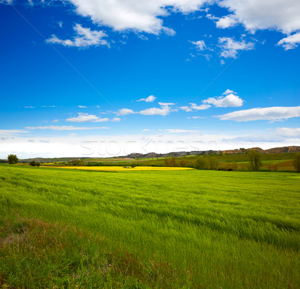 Cereal spring fields in Castilla Stock photo © lunamarina