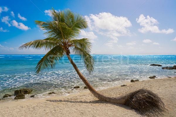 Kókuszpálma fa tengerpart égbolt víz nyár Stock fotó © lunamarina