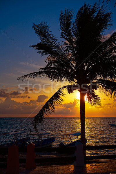 Amanecer playa palmera agua luz fondo Foto stock © lunamarina