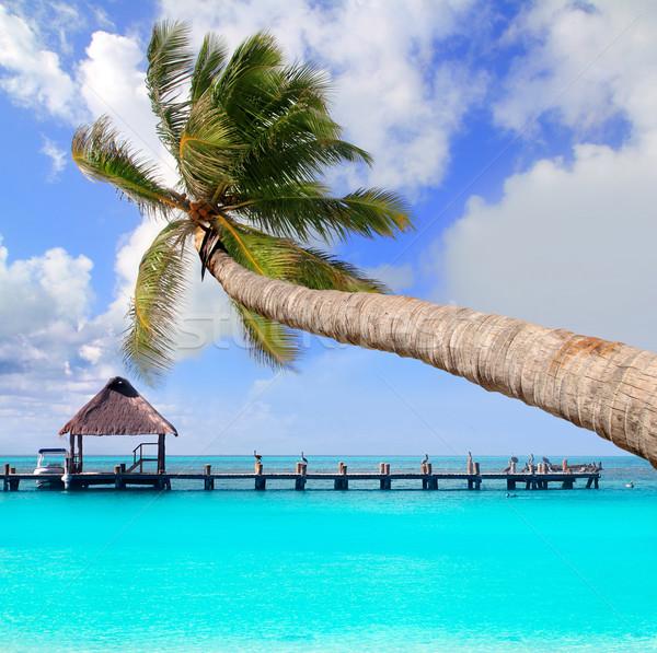 Palm tree in tropical perfect beach Stock photo © lunamarina
