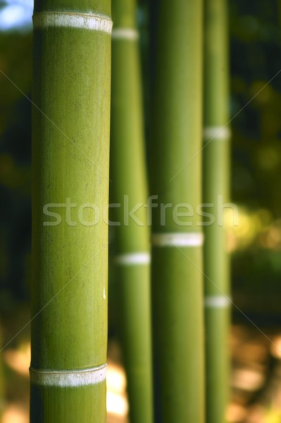 Stock photo: Bamboo cane green plantation