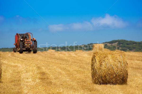 Traktor búza arany mező természet tájkép Stock fotó © lunamarina