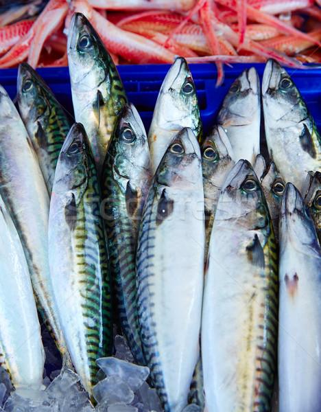 Mackerel fish from mediterranean stacked Stock photo © lunamarina