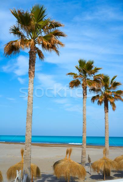 Tengerpart Valencia pálmafák nap utazás homok Stock fotó © lunamarina