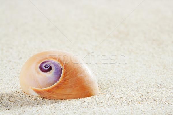 beach sea snail tropical white sand closeup macro Stock photo © lunamarina