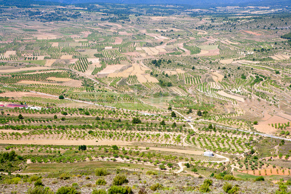 Vallei Valencia Spanje achtergrond groene land Stockfoto © lunamarina