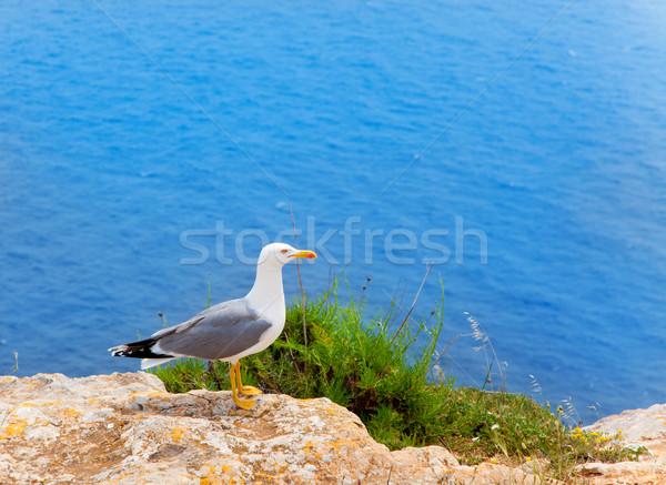 sea bird on mediterranean sea in Balearic islands Stock photo © lunamarina