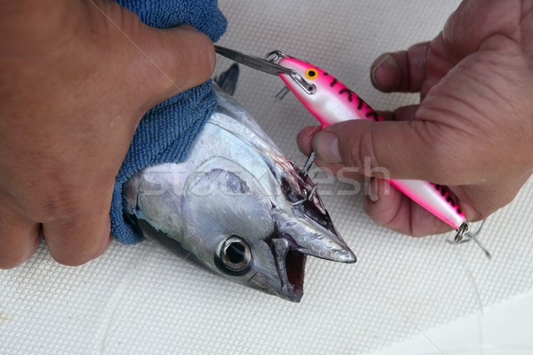 Blue fin bluefin tuna catch and release Stock photo © lunamarina