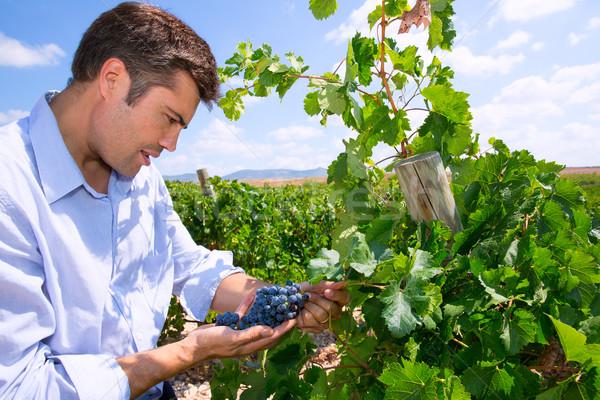 Winemaker oenologist checking Tempranillo wine grapes Stock photo © lunamarina