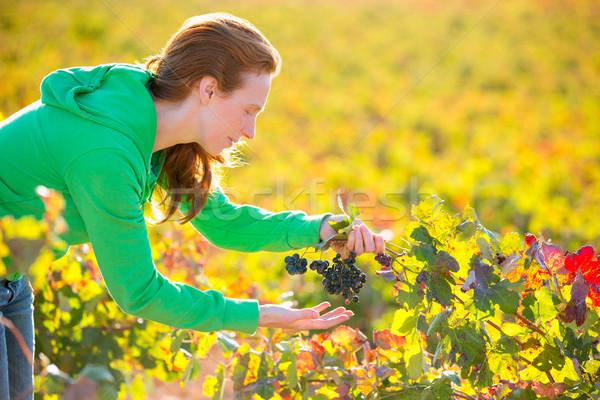 Stok fotoğraf: çiftçi · kadın · bağ · hasat · sonbahar · akdeniz