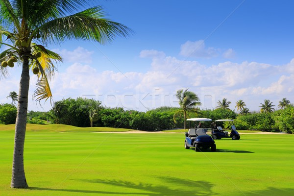 Golf tropicales palmiers Mexique arbre herbe Photo stock © lunamarina