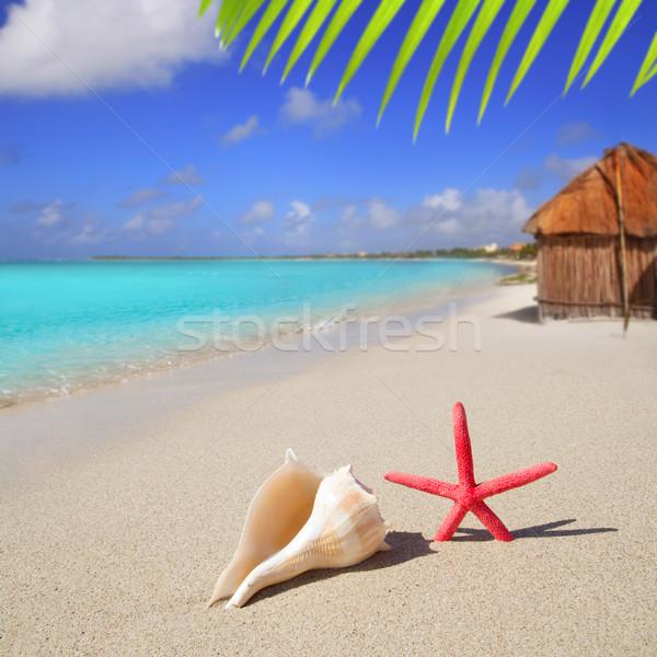 beach starfish and seashell on white sand Stock photo © lunamarina